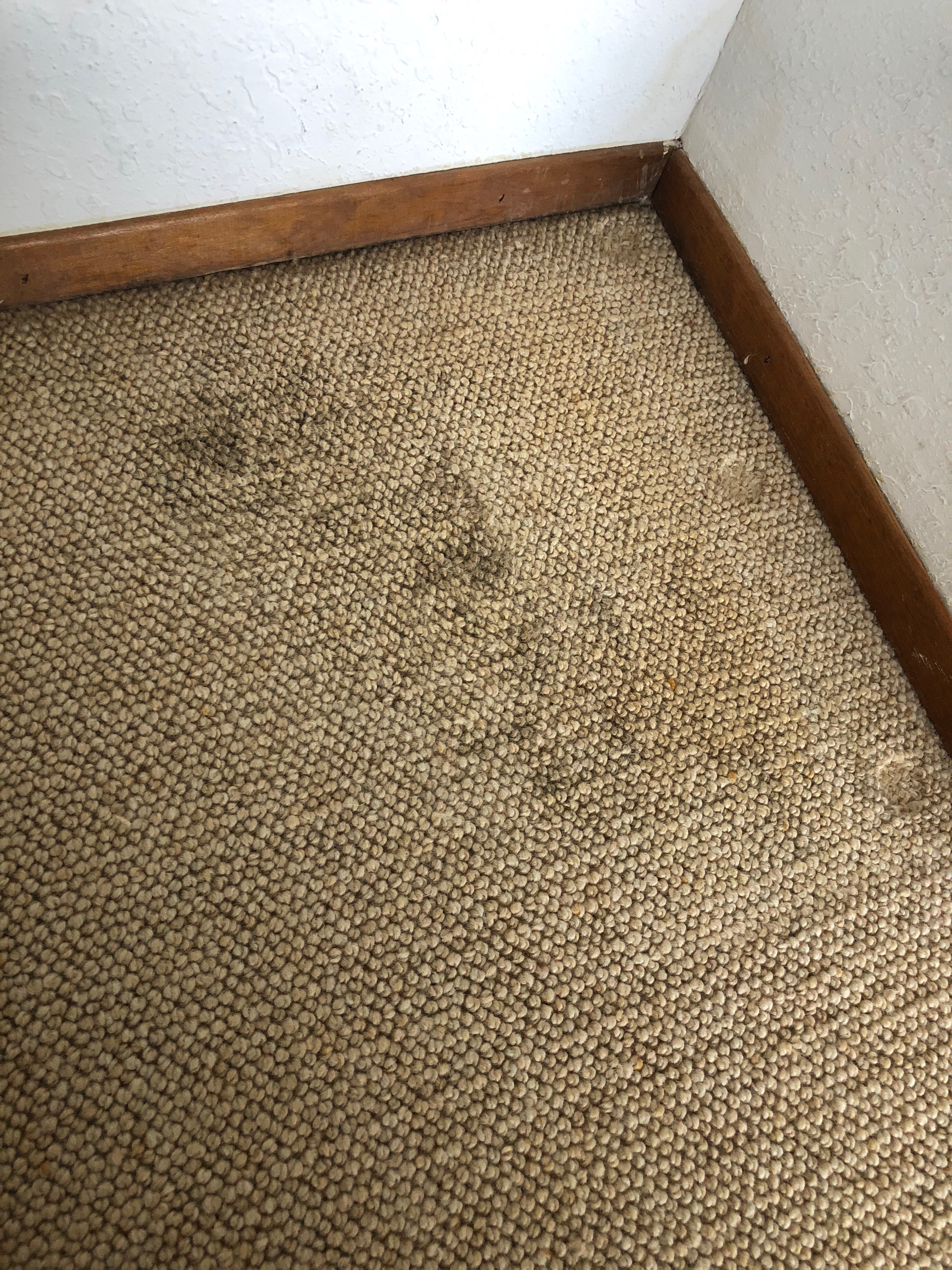 Berber Carpet Repair Ranch Santa Fe Ca 92067 San Diego